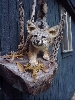 Gray Fox Taxidermy At Wild Things Taxidermy